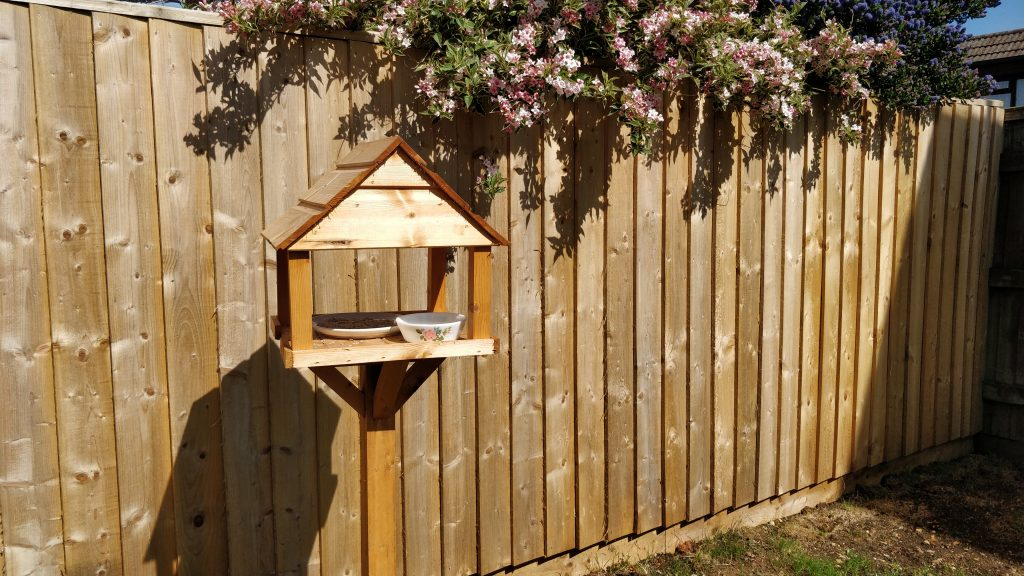 Bird Table 18 May 2020